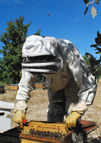 apiculteur-olivier-payan